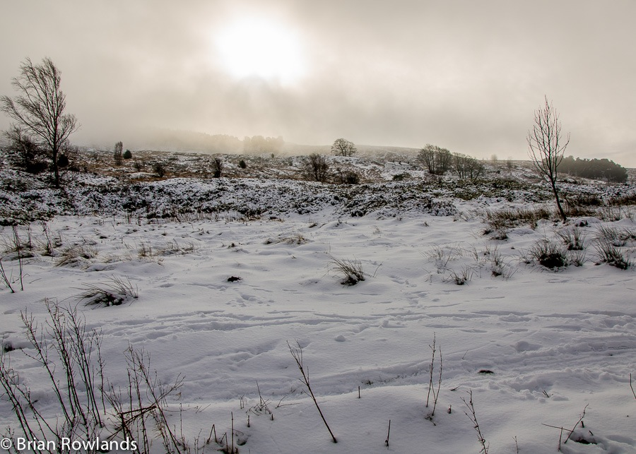 Winter Moor-1
